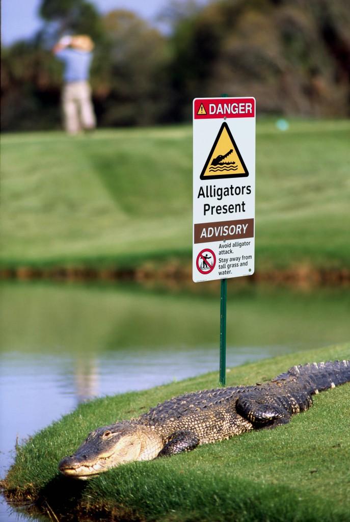 Alligators Present Safety Sign on Golf Course